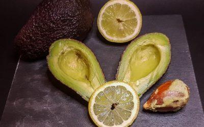 Tutto sull'avocado